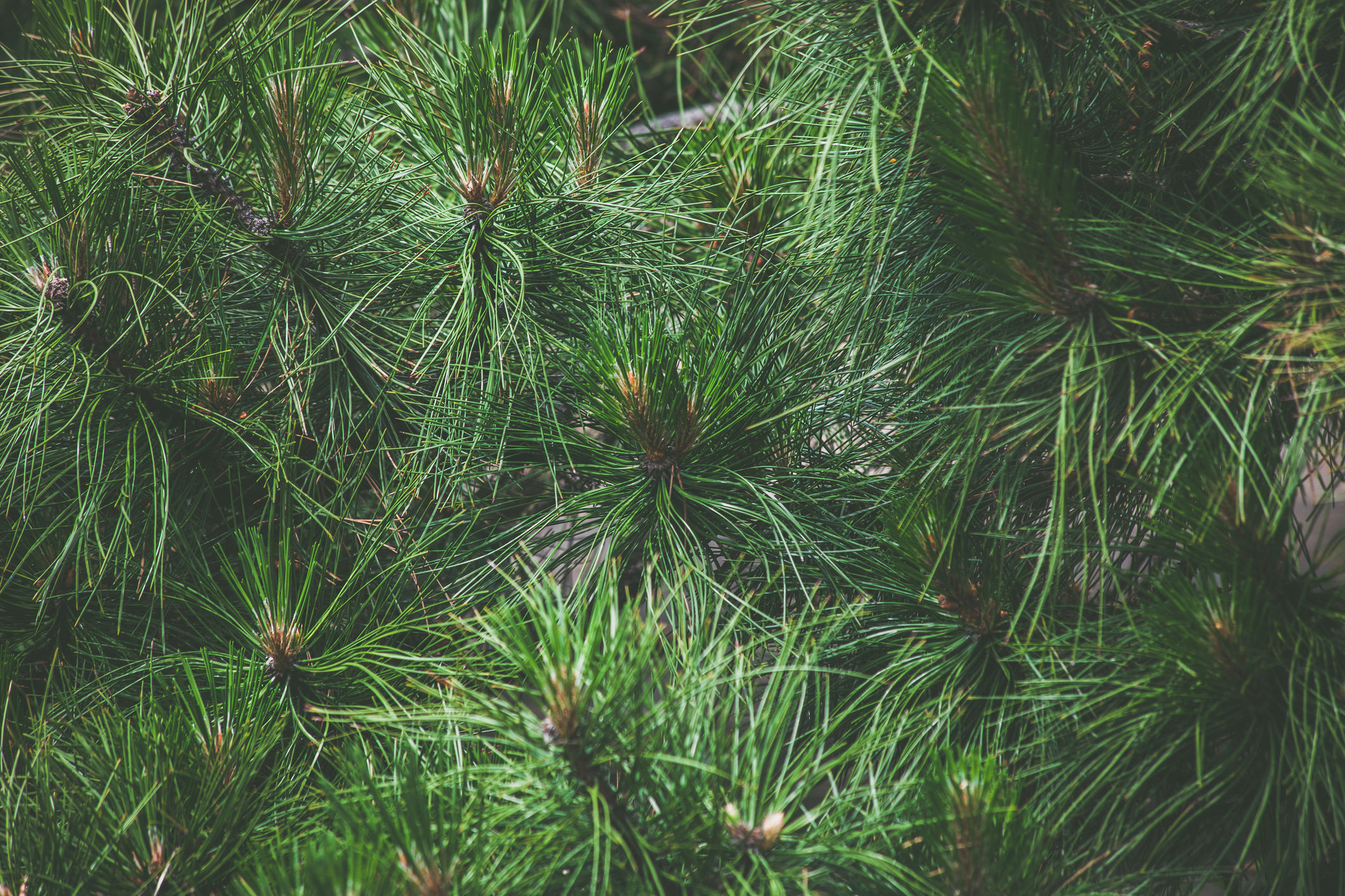 Why Successful Influencers Go With Evergreen
